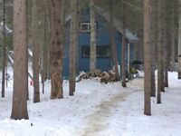 Private Cabin on 104 acre Maintained Recreational Nature Retreat