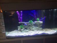 4 ft Aqua one tank
