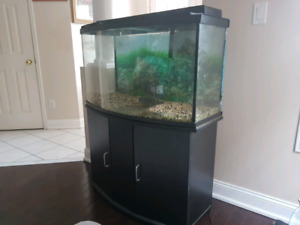 36 gal bow front tank