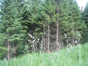 Build your dream home in one of Williams Lakes finest locations Williams Lake Cariboo Area image 8