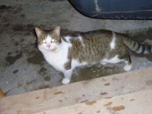 DO YOU RECOGNIZE THIS KITTY?