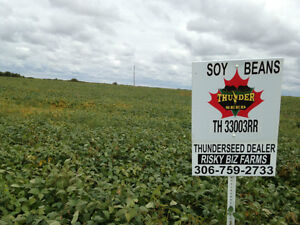 THUNDER AND PROGRAIN SOYBEAN VARITIES EARLY MATURING