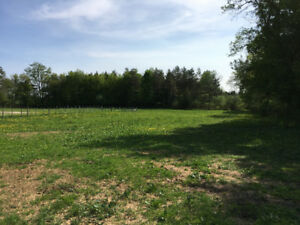 Barn & Pastures For Lease