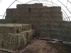Hay for Sale - Round  Bales & Squares / Horse Hay