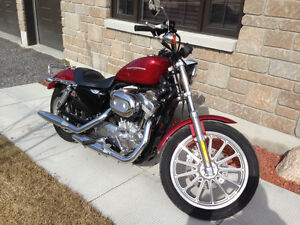 Almost new Harley 883 XL need a careful new owner!