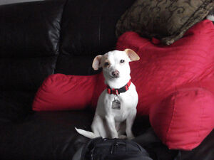 The Little Dog Zone - Pet sitter or Day care SE /No GST