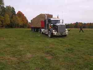 Alfalfa/Timothy Hay For Sale