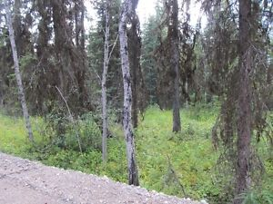2 Acre Lot For Sale Residential Neighborhood Prince George British Columbia image 6
