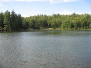 Terrain - bord de l'eau en zone blanche - boisé - Lac Barrow