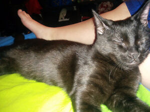 Looking to rehome our male black cat