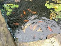 Koi carp collection
