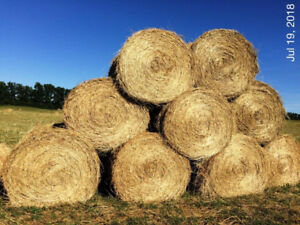 Cattle Hay for sale round bales 4X5.  103 bales available