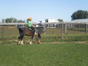 ISO: Volunteers for farm help with horses + kids London Ontario image 2