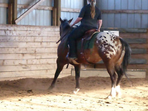 Horse training, miles and colt starting