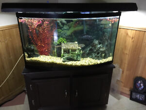 Bow Fish Tank for sale,