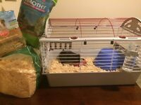 Guinea pig and cage/food/bedding
