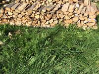 Firewood Bundles-1/8 cord-Wednesday Delivery