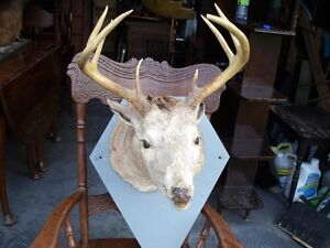 reduced MOUNTED DEER HEAD 8 POINT