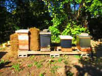 Winter Hive Prep - Beekeeping Workshop - BLB Honey DRESDEN ON