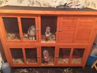 2 beautiful female rabbits for sale with double hutch .