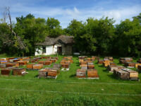 Intermediate Beekeeping Course- June 5, 2017