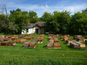 Intermediate Beekeeping Course- June 5, 2017