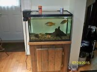 Fish,.fish tank and stand