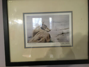 """Sue Coleman """"UP-CLOSE""""( Tundra Wolf ) Print. MINT IN FRAME"""