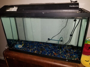 40 gallon fish tank w/bubbler/gravel and african catfish $75