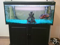 60 Gallon Fish Tank with 2 Fluval 306 canister filters
