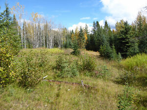 Buy the timber, get 80 acres free! Prince George British Columbia image 1