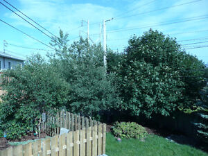 For Rent - 3 bedroom top half of house. Snow-clearing included St. John's Newfoundland image 8