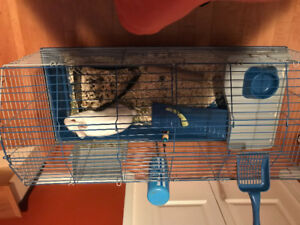 Dwarf bunny and cage for sale