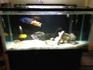 AQUARIUM 77 GALLONS WITH STAND AND COVER, WITH CICHLIDS FISH