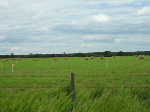 Looking for crop land to rent
