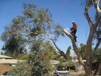 Tree and hedge removal and or trimming
