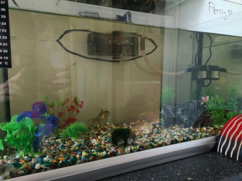 Fish tank aquarium   in Perth, Perth and Kinross   Gumtree