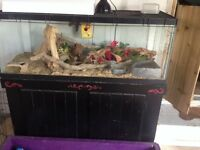 Large terrarium and snake