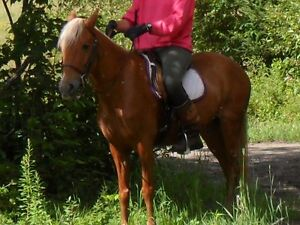training available for med. or large ponies