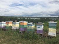 Beekeeper Looking for Farmland for Bees