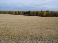 40 acre Property- Financing/Partial trades