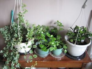 WANTED planters or hanging planters like shown in pic