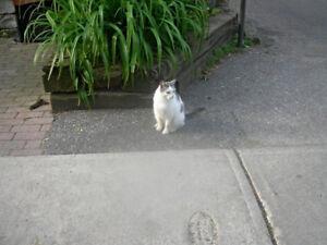 MISSING CAT .. Small White & Grey Cat last seen Nov 6, 2017
