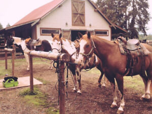 Looking for part board on a horse