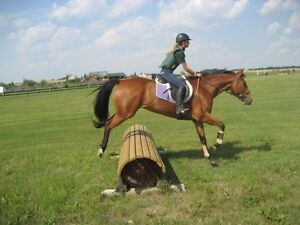 GREAT KIDS HORSE SAFE GELDING JUMPING WESTERN ENGLISH