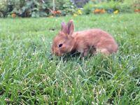 Rabbit - bunnies too cute!