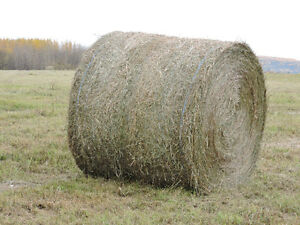 1200 pound Round Bales for sale
