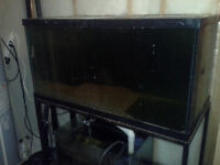 Fish tank,stand, and sump