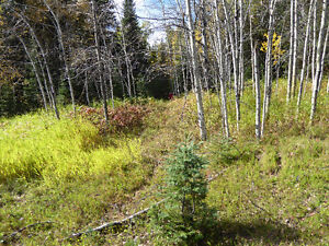 Buy the timber, get 80 acres free! Prince George British Columbia image 2