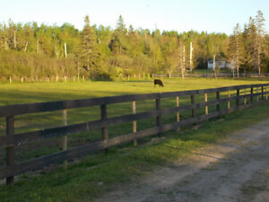 HORSE BOARDING NEAR AMHERST NS & PORT ELGIN, NB